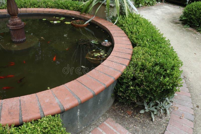 Primer de la fuente con el pez de colores anaranjado y agua vergonzosa imágenes de archivo libres de regalías