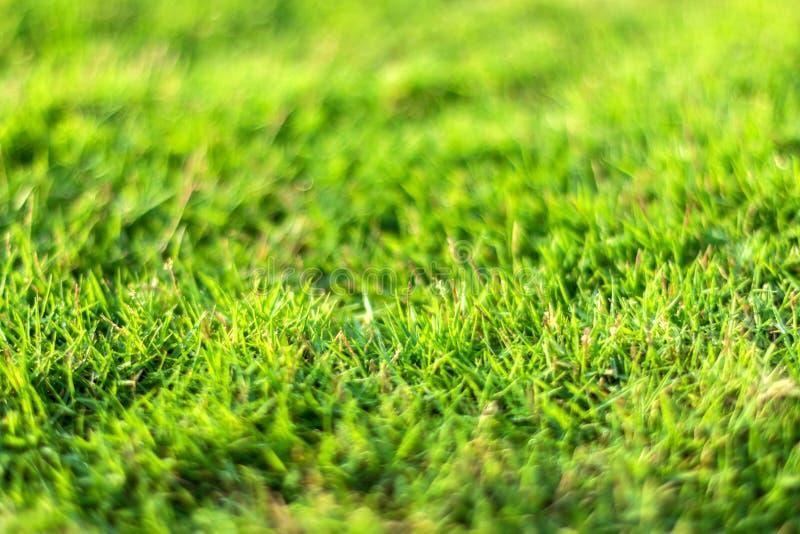 Primer de la hierba verde en un fondo borroso natural fotografía de archivo