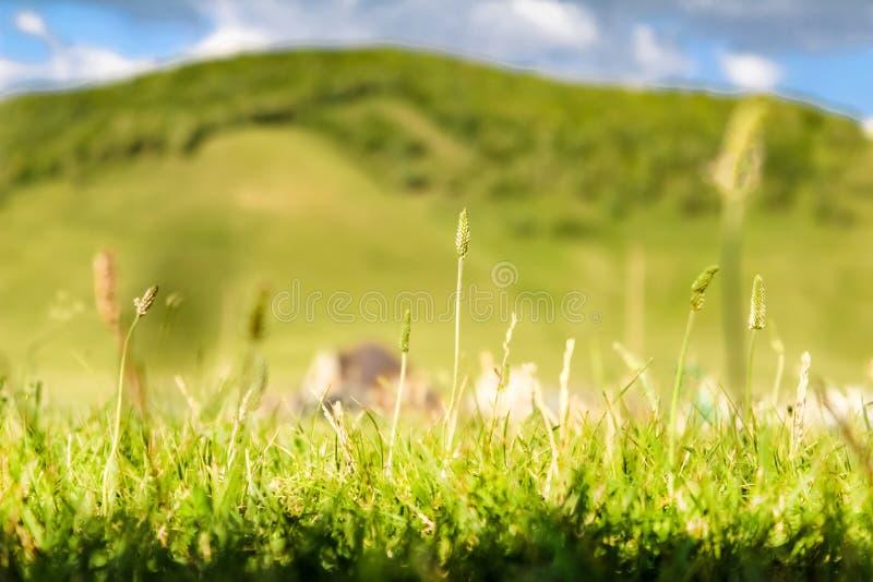 Primer de la hierba verde de la primavera que pasa por alto un paisaje montañoso distante y casas fotografía de archivo