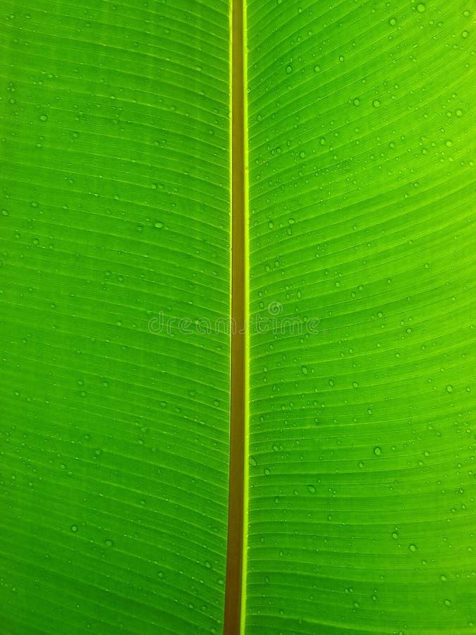 Primer de la hoja de la planta verde fotos de archivo libres de regalías