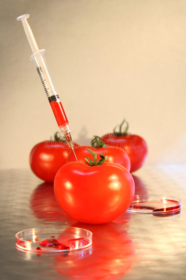 Primer de la jeringuilla en tomate imagen de archivo libre de regalías