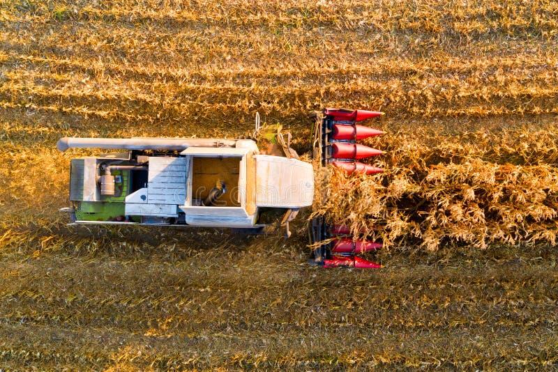Primer de la máquina segadora que cosecha maíz por la tarde en el campo Silueta del hombre de negocios Cowering imágenes de archivo libres de regalías