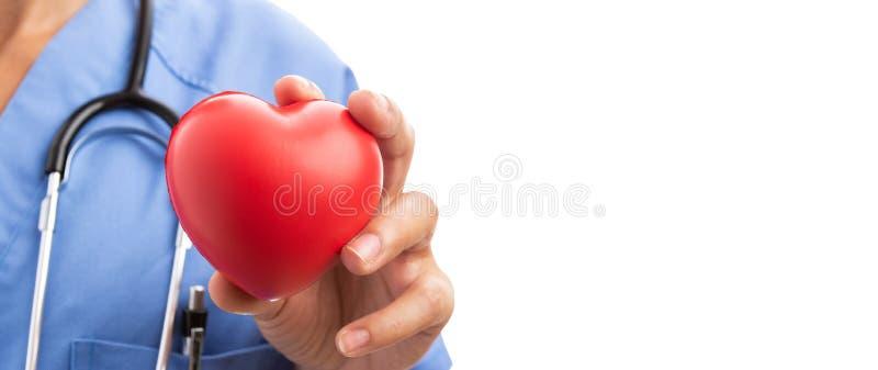 Primer de la mano del doctor del cardiólogo de la mujer que lleva a cabo el corazón rojo del juguete imágenes de archivo libres de regalías