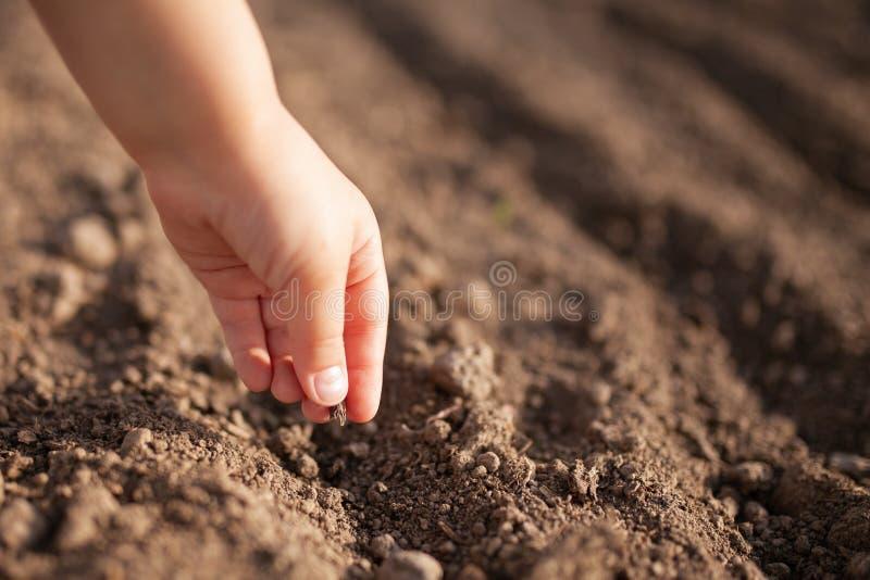 Primer de la mano del pequeño niño que planta una semilla en suelo imagen de archivo