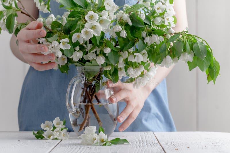 Primer de la mano de la mujer que lleva a cabo una rama del manzano floreciente de la primavera Concepto del florista imagenes de archivo