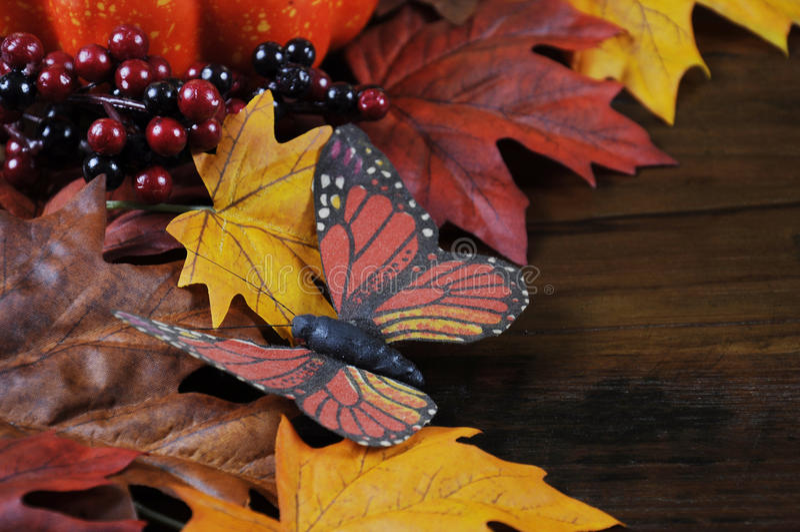 Primer de la mariposa del fondo de Autumn Fall imagenes de archivo