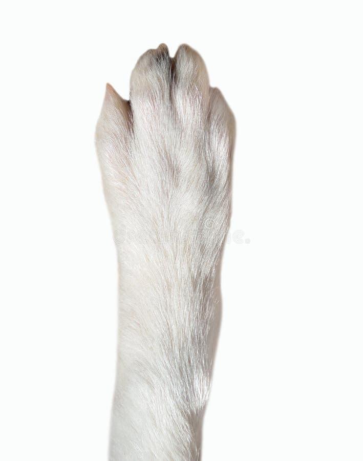 Primer de la pata del perro fotos de archivo