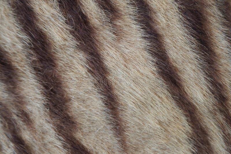Primer de la piel del tigre imagen de archivo libre de regalías