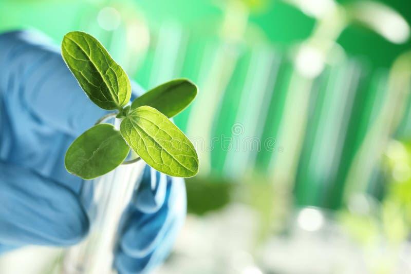 Primer de la planta en mano del científico fotos de archivo