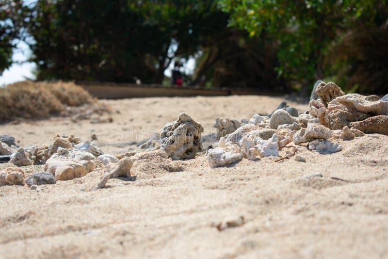 Primer de la playa arenosa marr?n amarilla con los corales en primero plano y los ?rboles verdes en fondo fotografía de archivo libre de regalías
