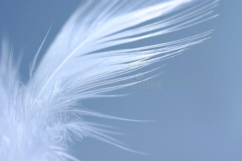 Primer de la pluma blanca fotografía de archivo libre de regalías