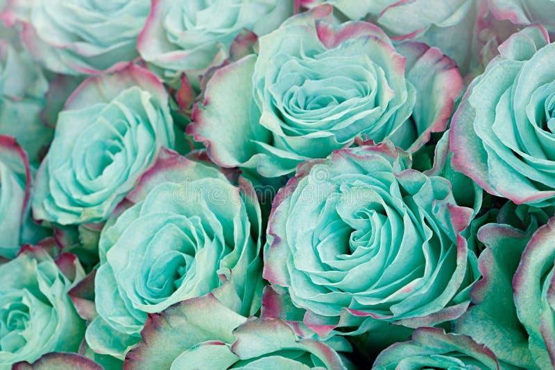 Primer de la rosa azul azul del pastel de la turquesa Fondo floral imagenes de archivo