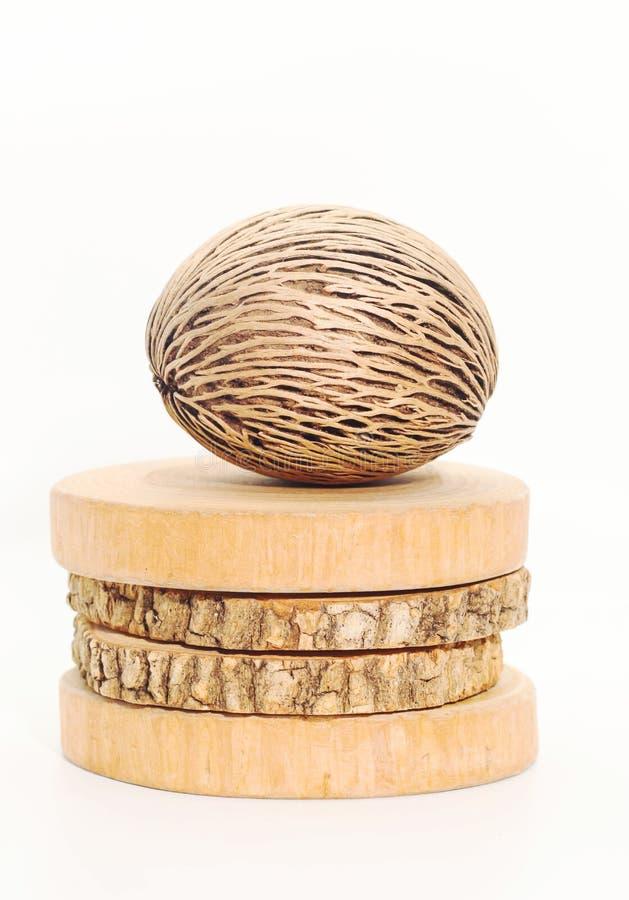 Primer de la semilla seca del ` s del oddloam de Cerbera en la madera redonda de la teca en whi imagen de archivo libre de regalías