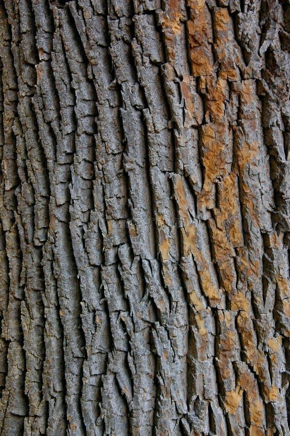 Primer de la textura tirado de corteza de árbol marrón fotografía de archivo