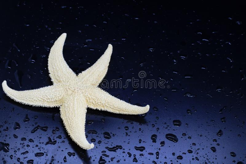 Primer de las estrellas de mar en el fondo azul oscuro, descensos del agua, criaturas del mar, concepto de resto en países tropic imagenes de archivo