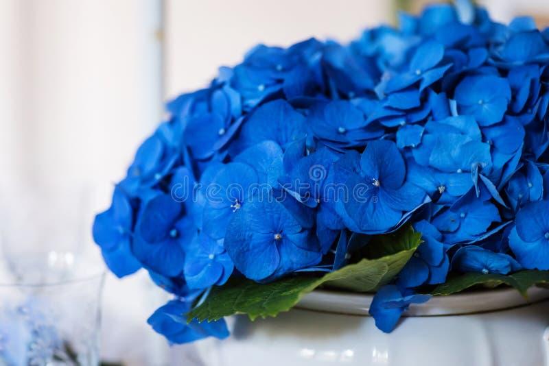Primer de las flores azul marino del hortensia fotografía de archivo