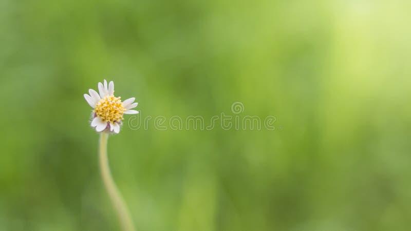 Primer de las flores de la hierba foto de archivo libre de regalías
