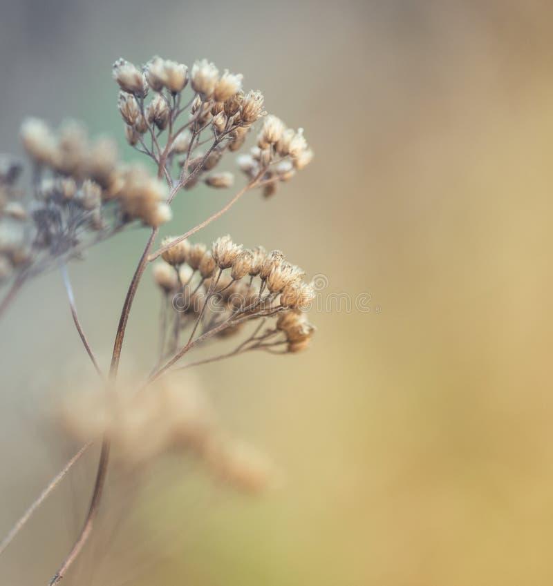 Primer de las flores secas del prado imagenes de archivo