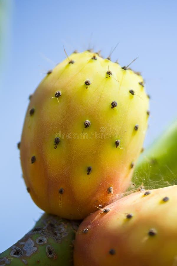 Primer de las frutas enteras maduras frescas coloridas del cactus del higo chumbo en un brunch ` La India del fichi d de la Opunt fotos de archivo