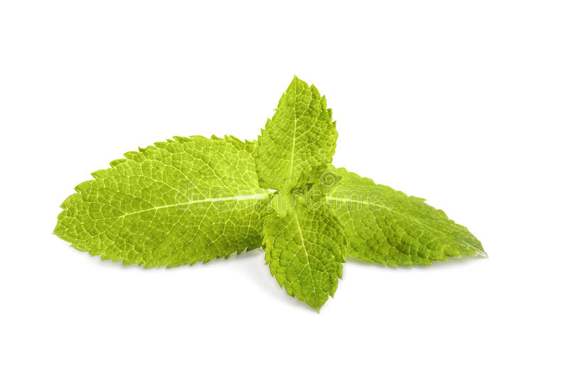 Primer de las hojas de menta fresca, aislado en un fondo blanco Menta verde, hierbabuena Planta medicinal Menta dulce de los offi imagenes de archivo
