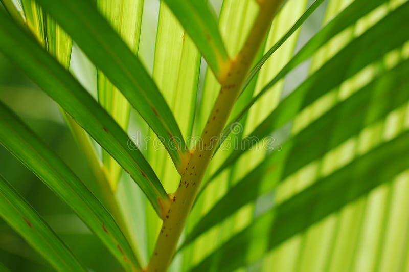 Primer de las hojas de palma fotografía de archivo