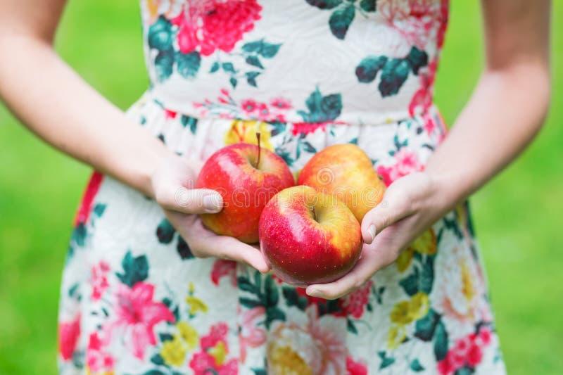 Primer de las manos femeninas que sostienen manzanas rojas imagen de archivo