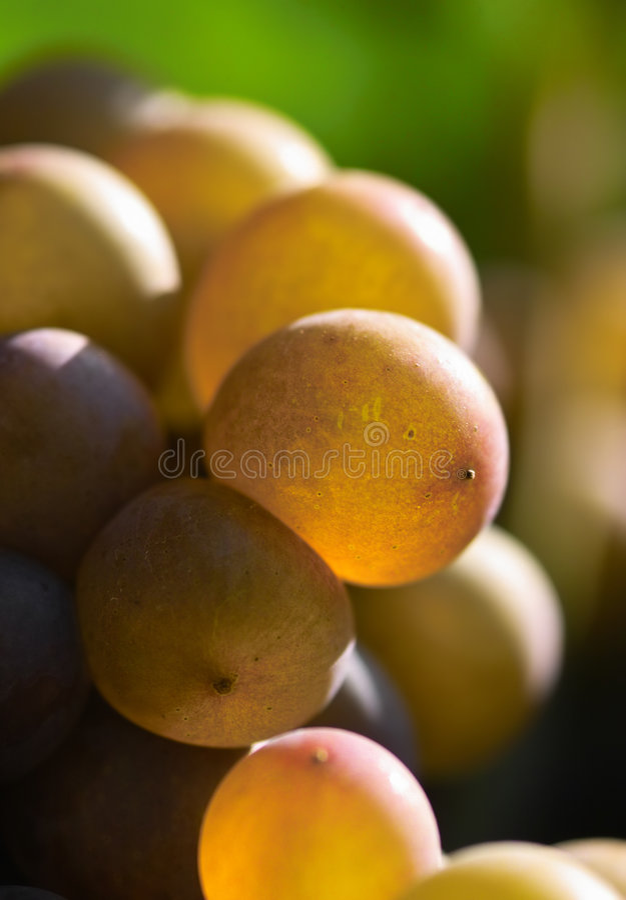 Primer de las uvas imagenes de archivo