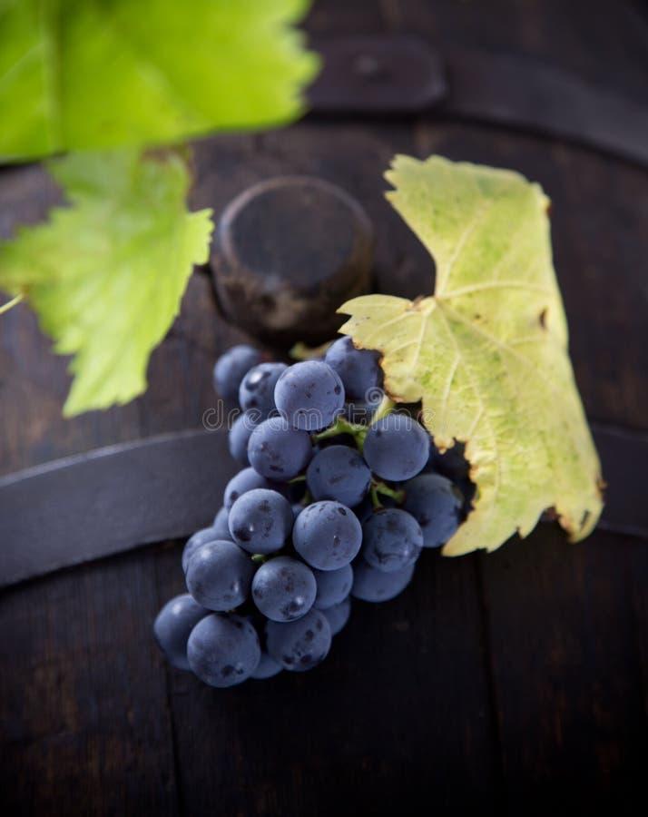 Primer de las uvas de vino foto de archivo libre de regalías
