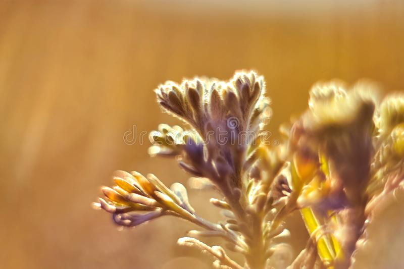 Primer de los lanzamientos jovenes de la hierba en luz del sol caliente imágenes de archivo libres de regalías
