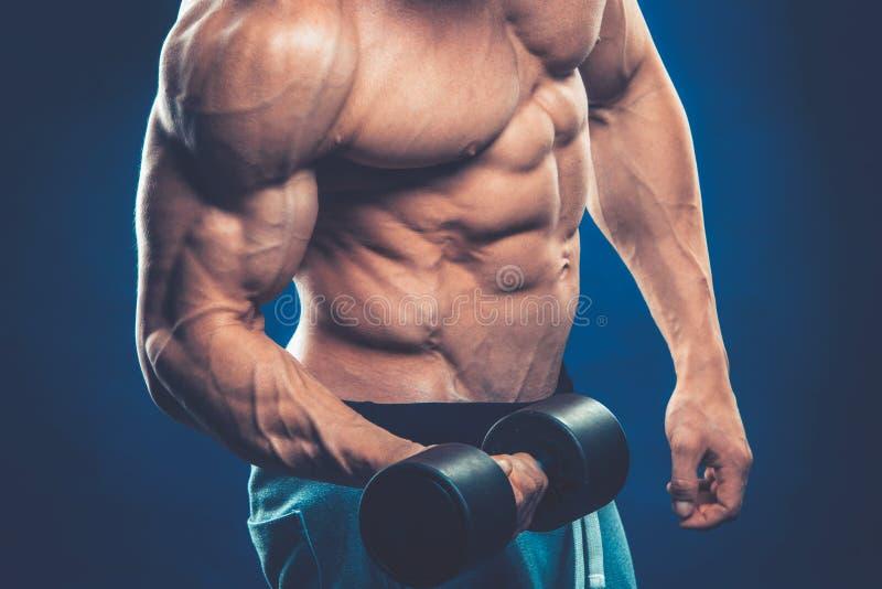 Primer de los pesos de elevación musculares de las pesas de gimnasia de un hombre joven en dar imagen de archivo