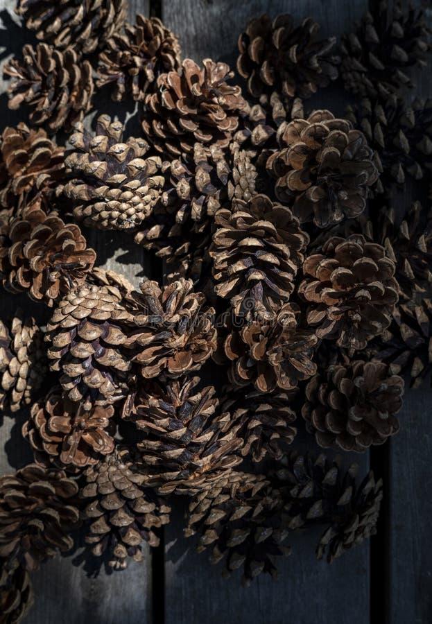 Primer de los pinecones hermosos llenados para arriba juntos en un lugar oscuro foto de archivo libre de regalías