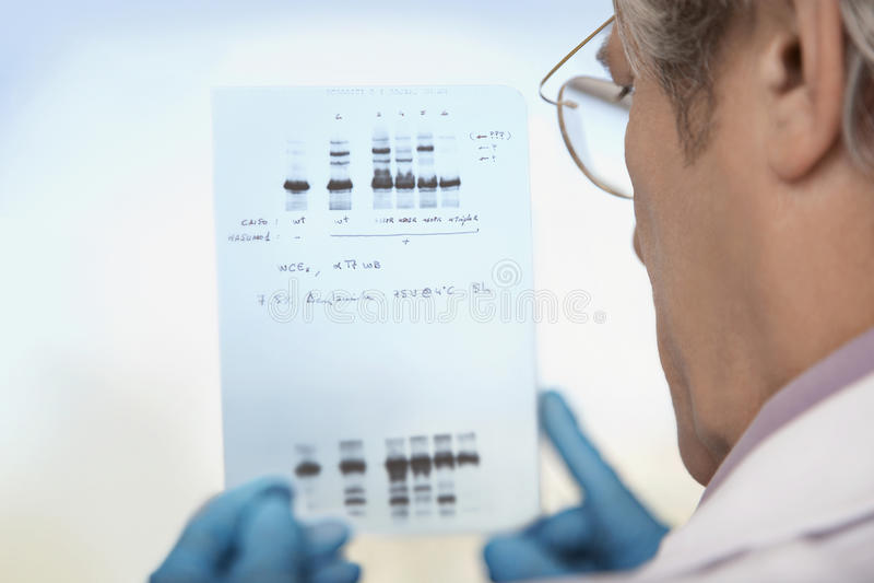 Primer de los resultados de la prueba de la DNA de Looking At del científico imagenes de archivo