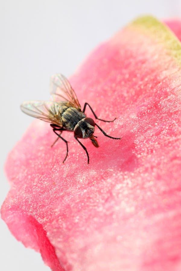 Primer de moscas imagen de archivo