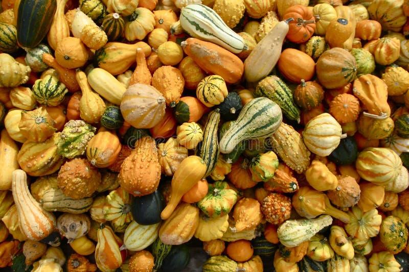 Primer de muchos Autumn Gourds fotografía de archivo libre de regalías