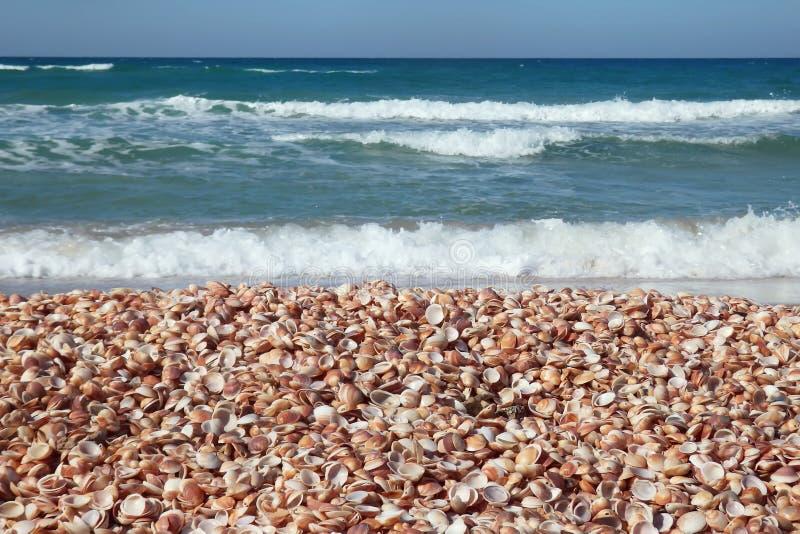 Primer de oro de las conchas marinas en la costa con las ondas espumosas fotos de archivo
