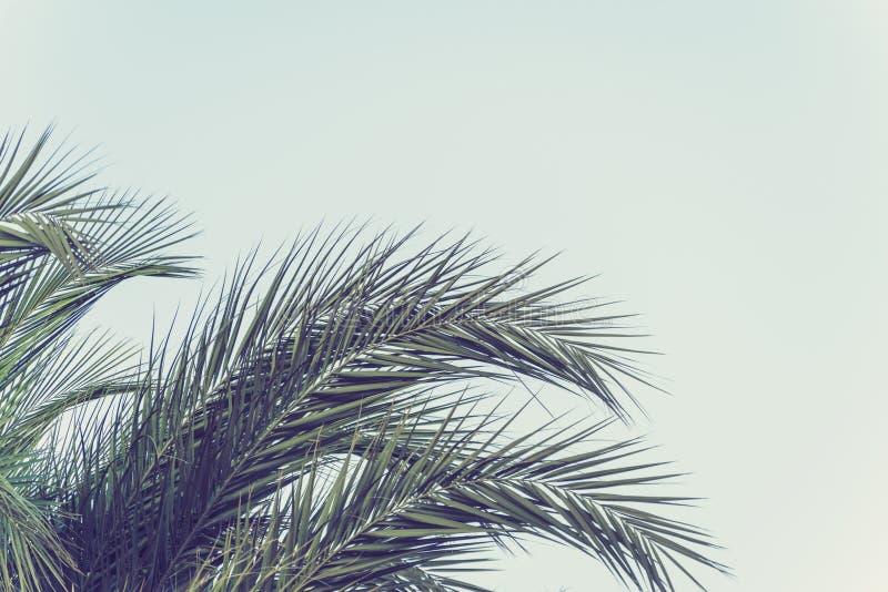 Primer de ramas de los árboles de palmas de coco Visi?n inferior imágenes de archivo libres de regalías