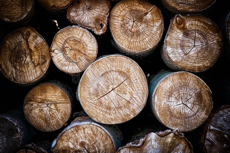 Primer de registros de árboles en naturaleza muchos registros cutted imagenes de archivo