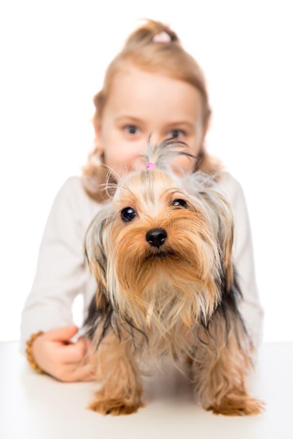 Primer de Terrier y una niña imagenes de archivo