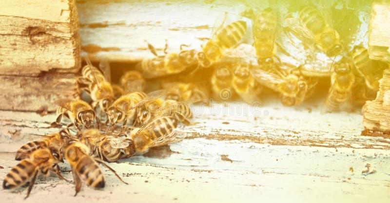 Primer de trabajo de la abeja fotos de archivo libres de regalías