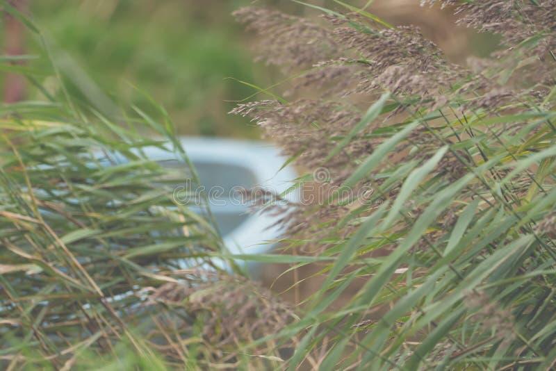 Primer de un barco ocultado en la hierba alta foto de archivo libre de regalías