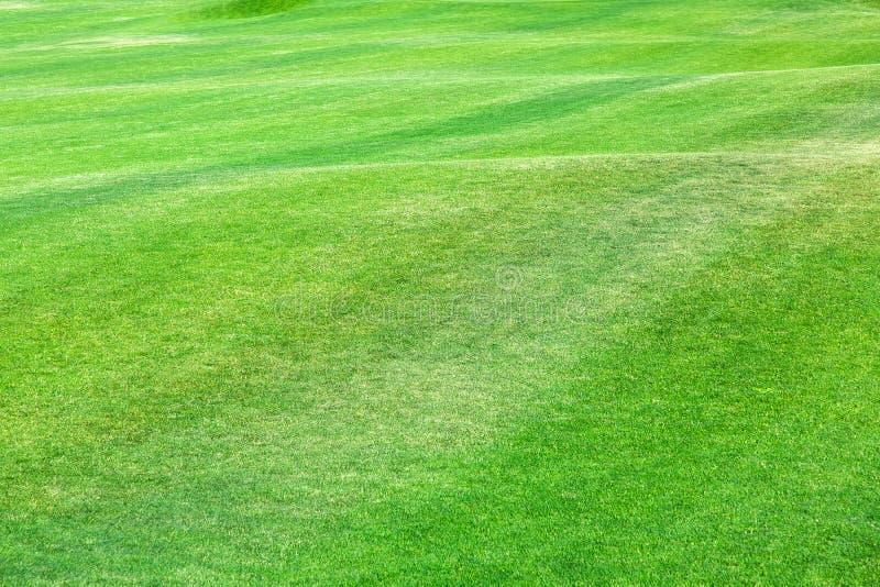 Primer de un césped verde en un claro ondulado fotos de archivo