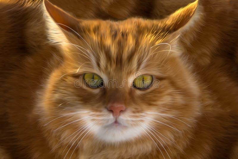 Primer de un gato del jengibre fotos de archivo