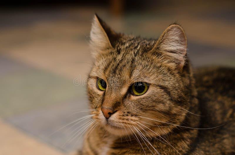 Primer de un gato divertido imagen de archivo