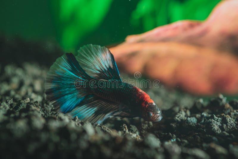 Primer de un pequeño pescado colorido exótico hermoso fotos de archivo libres de regalías