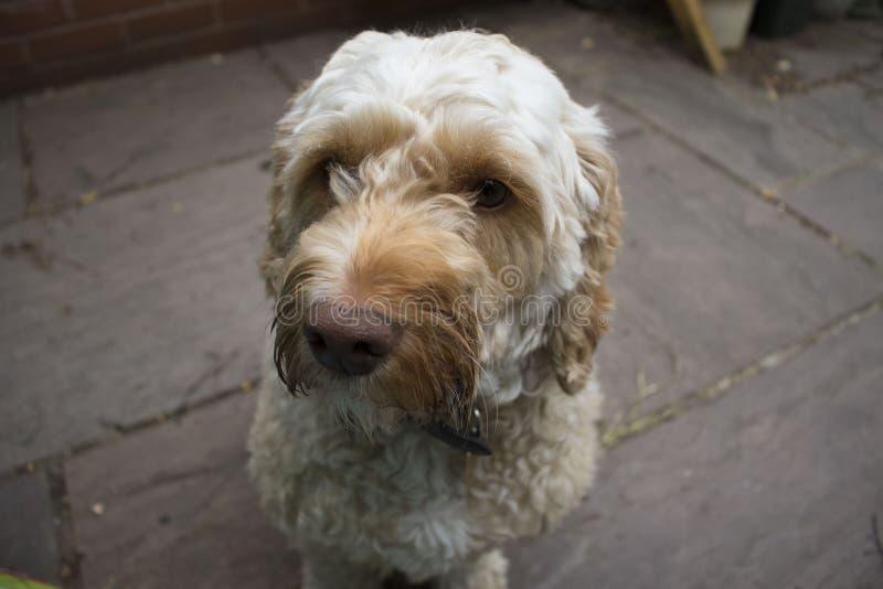Primer de un perro foto de archivo libre de regalías