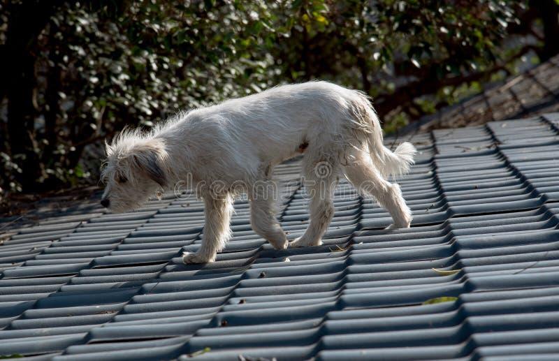 Primer de un perro perdido en el tejado imagen de archivo