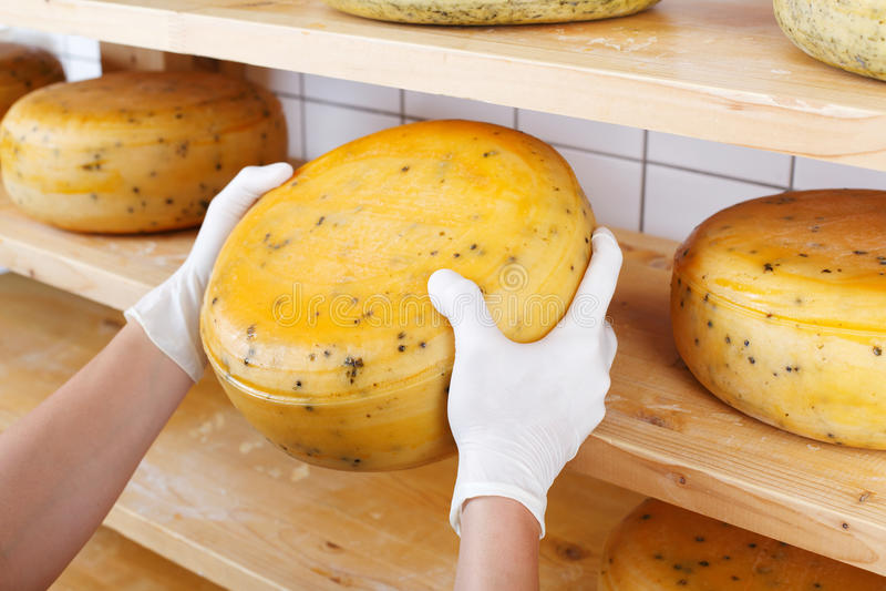 Primer de un quesero que selecciona los quesos maduros imagen de archivo libre de regalías