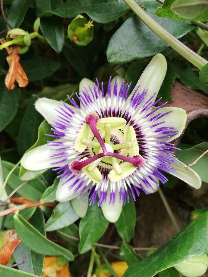 Primer de una flor foto de archivo