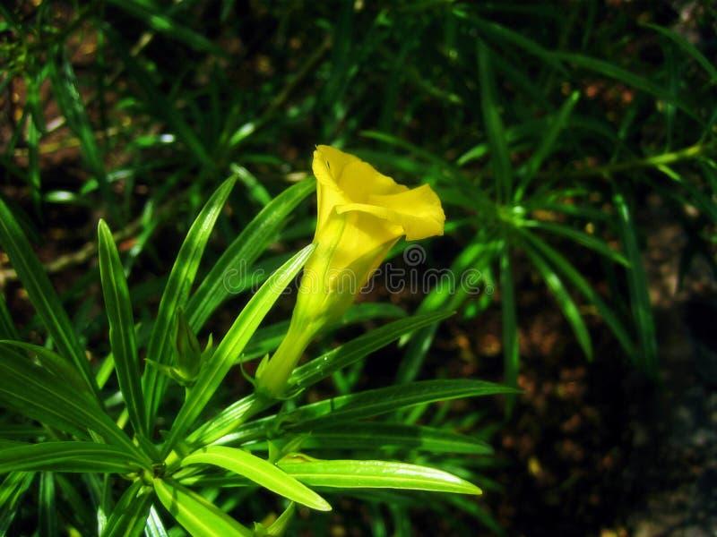 Download Primer De Una Flor Tropical Foto de archivo - Imagen de jardín, hermoso: 184466