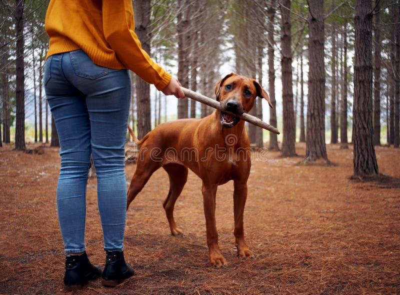 Primer de una mujer que juega con su perro en bosque foto de archivo